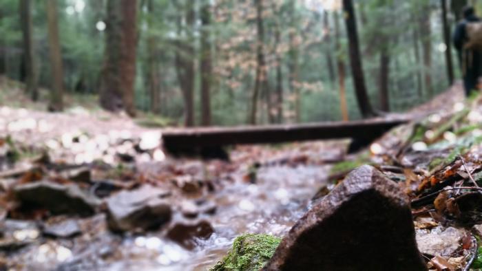 creek Cook Forest, Pennsylvania
